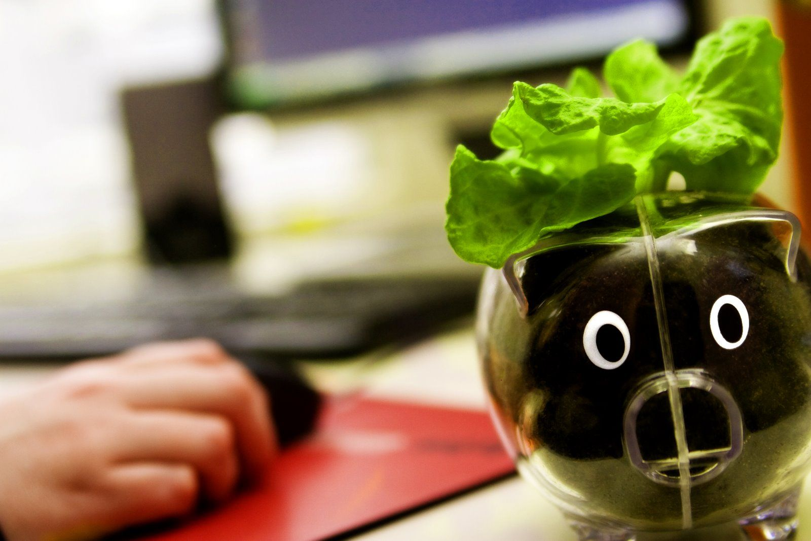 cute and healthy - grow lettuce at work
