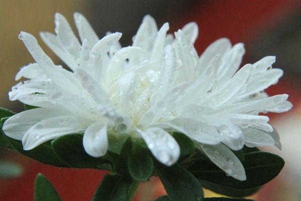 10 cách chụp ảnh hoa tuyệt đẹp - Tin Tức - Phạm Sơn