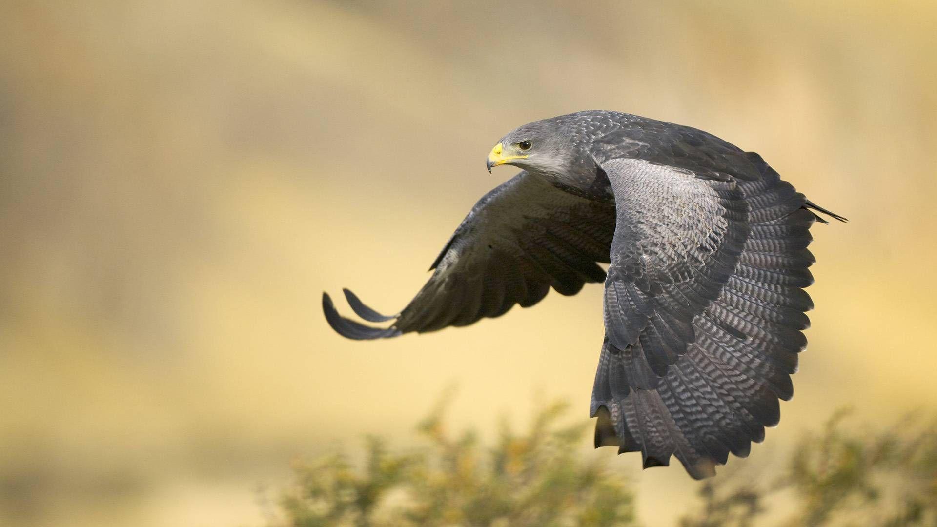 In flight #bird #nature #animal
