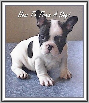 Dog Ownership Ideas Dog Is The Greatest Companion Dogs French