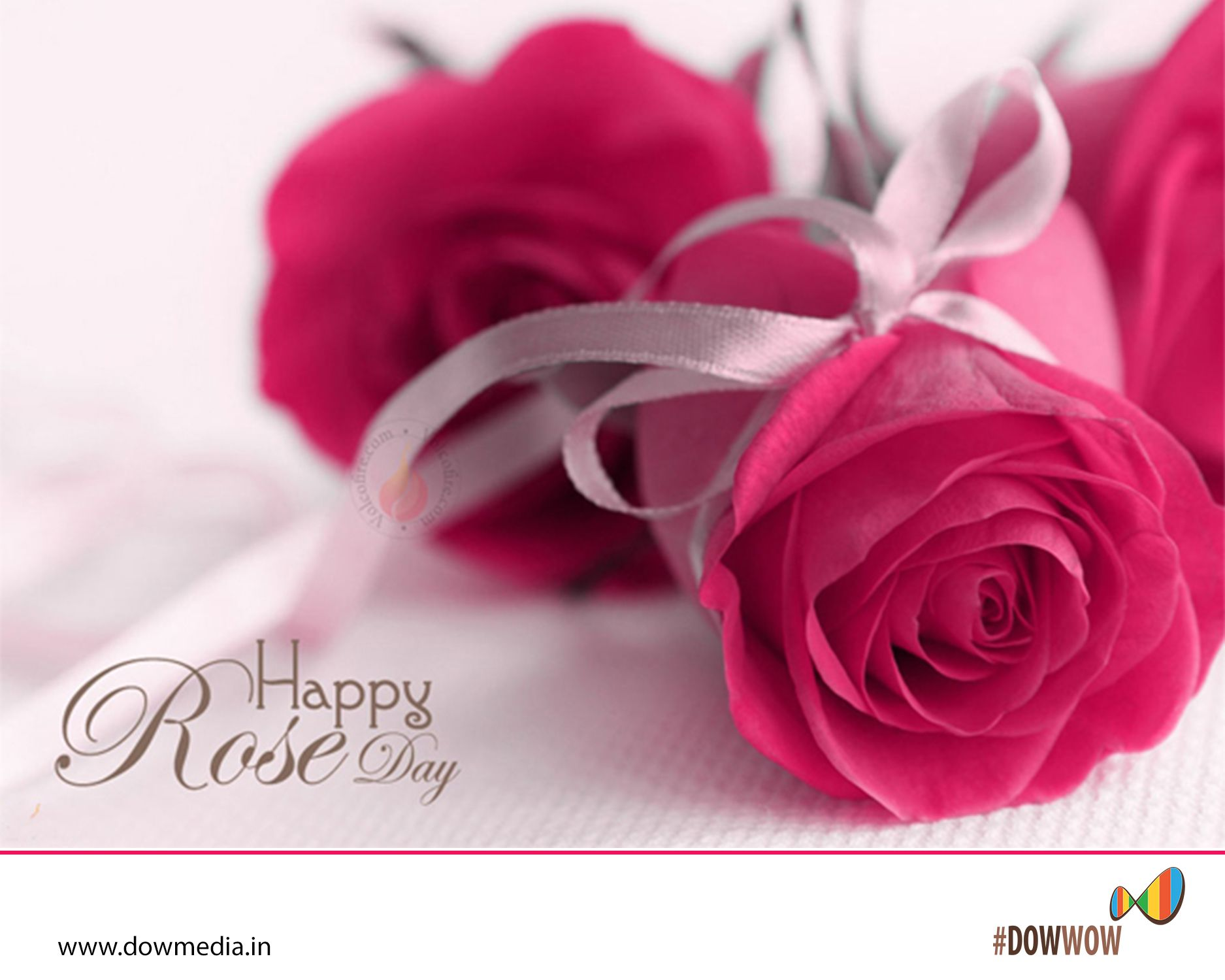 Rose is not only a flower it is a symbol of love it indicates rose is not only a flower it is a symbol of love it indicates biocorpaavc Images