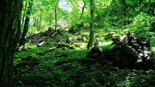 Green Witchcraft Masterpost #greenwitchcraft Green Witchcraft Masterpost #greenwitchcraft