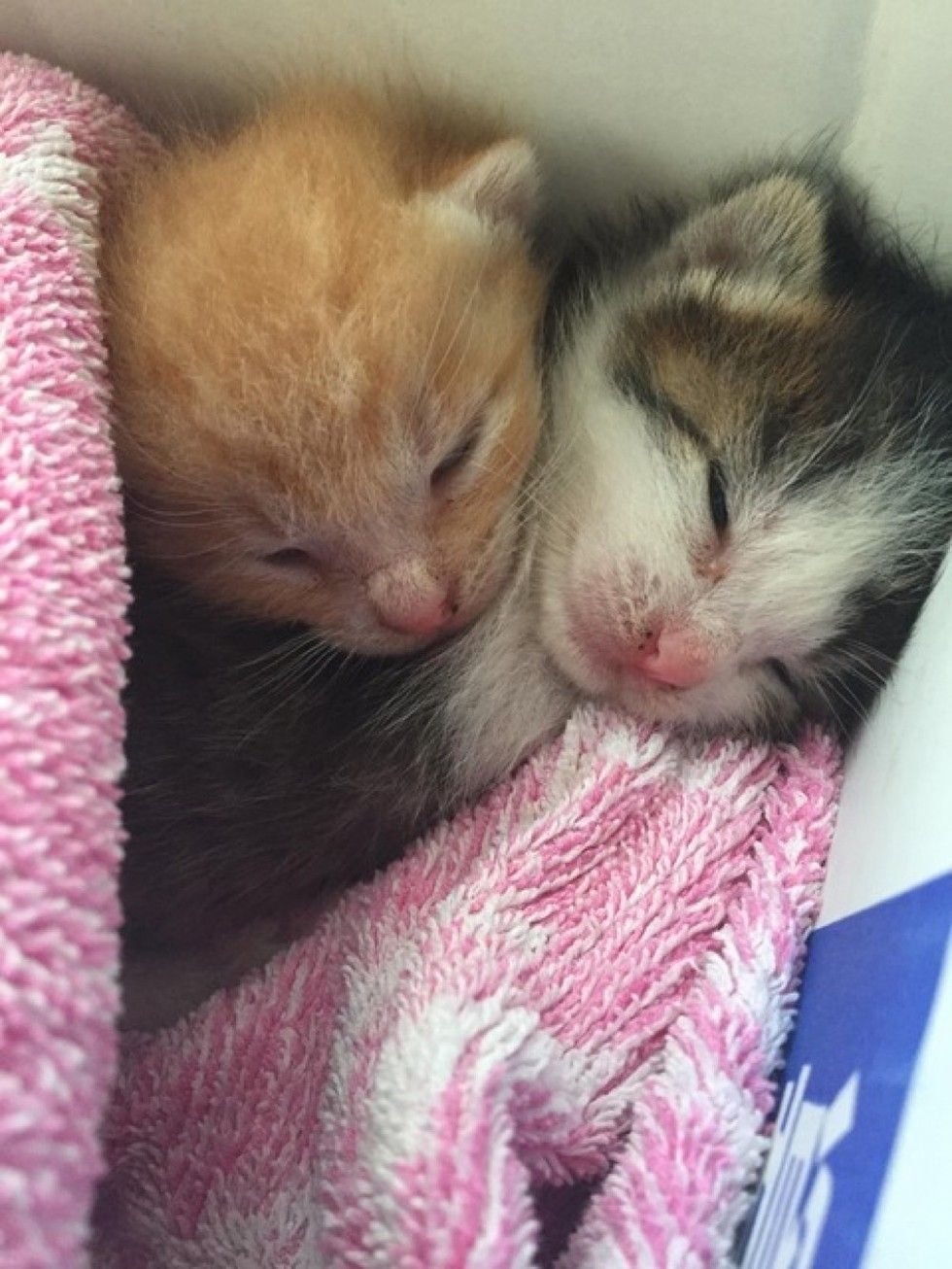 Two Kittens Rescued The Day Before Typhoon Growing Up Together Love Meow Kittens Cutest Cute Cats And Dogs Kittens