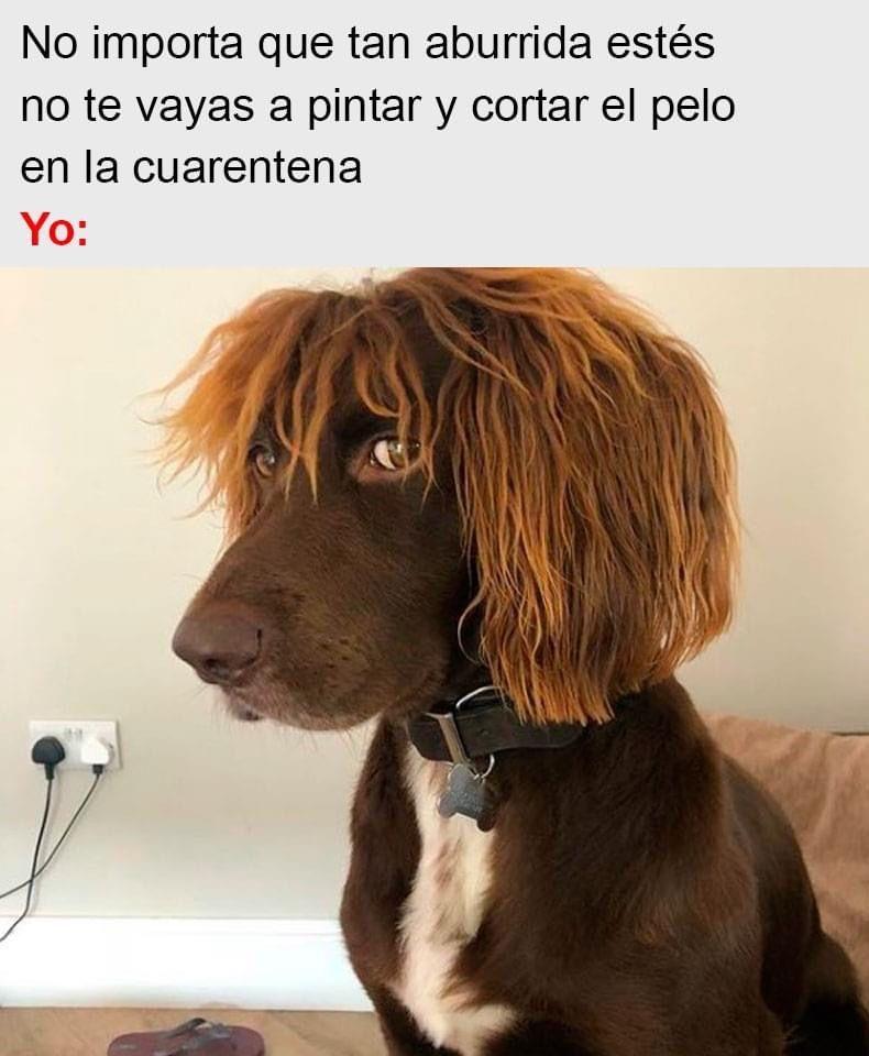 Pin De Maria Vargas En Perros Memes Divertidos Imagenes De Risa Memes Memes