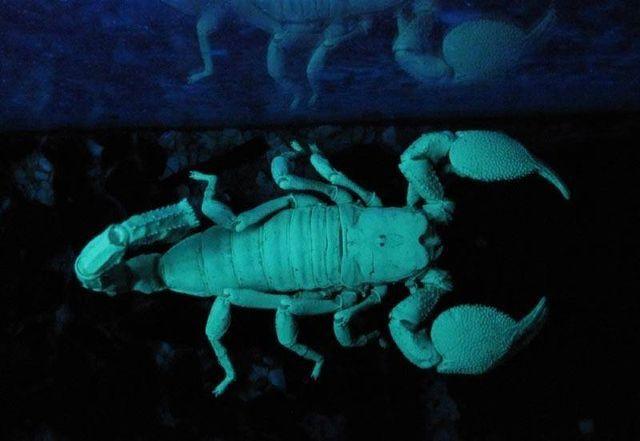 Pin On Scorpions
