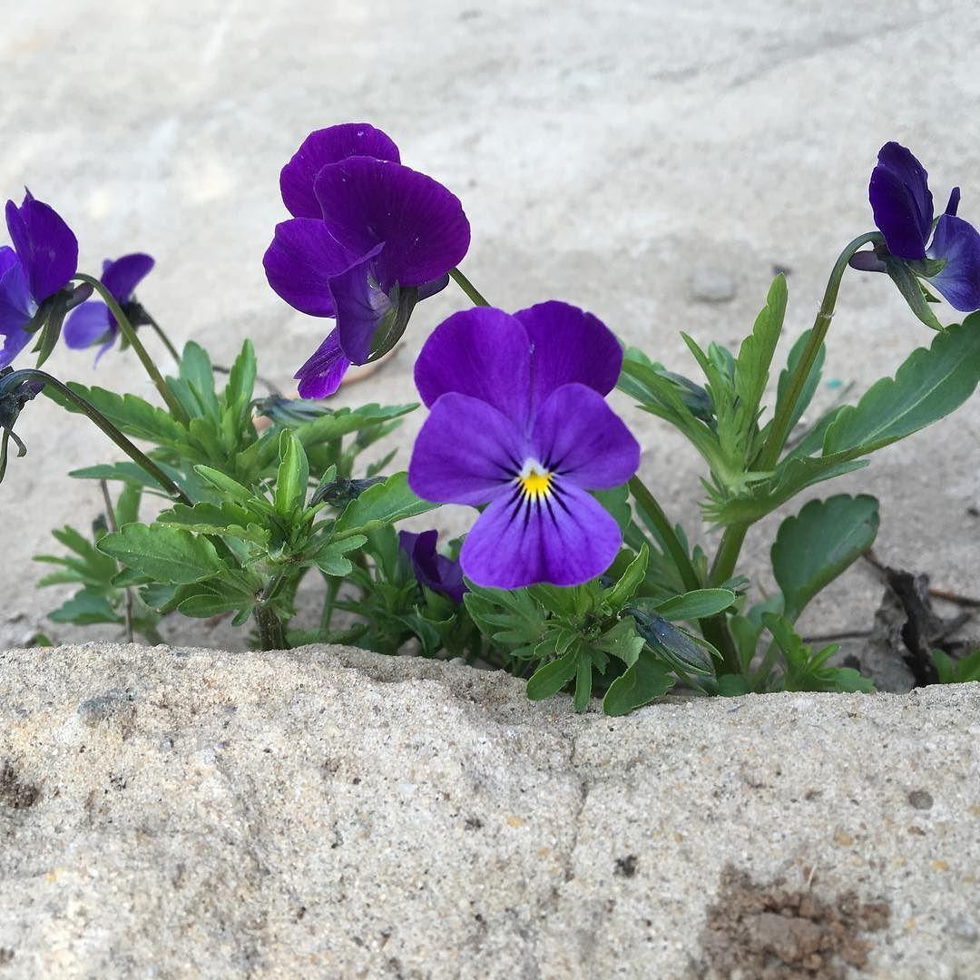 цветы из бетона