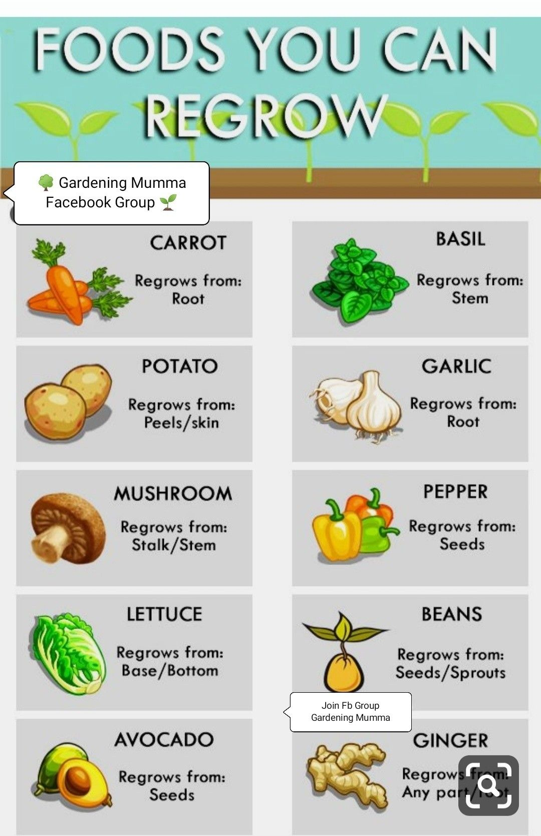 Foods You Can Re Grow Yourself From Kitchen Scraps And Hack