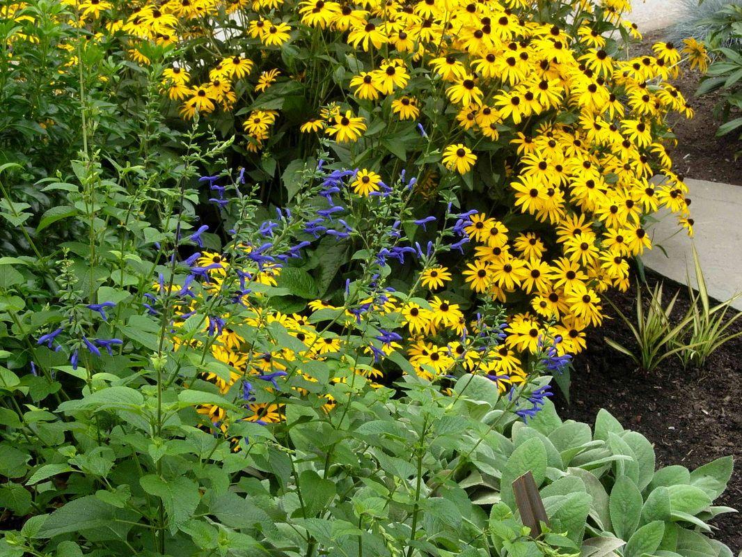 Gardens northeast gardens Northeast Portland Garden