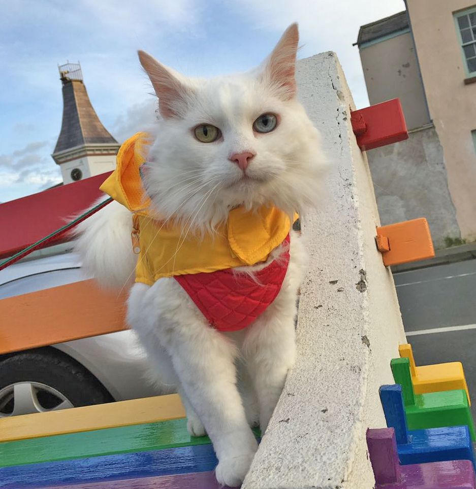 Meet The Stunning Senior Cat Who Doesn't Let Being Deaf
