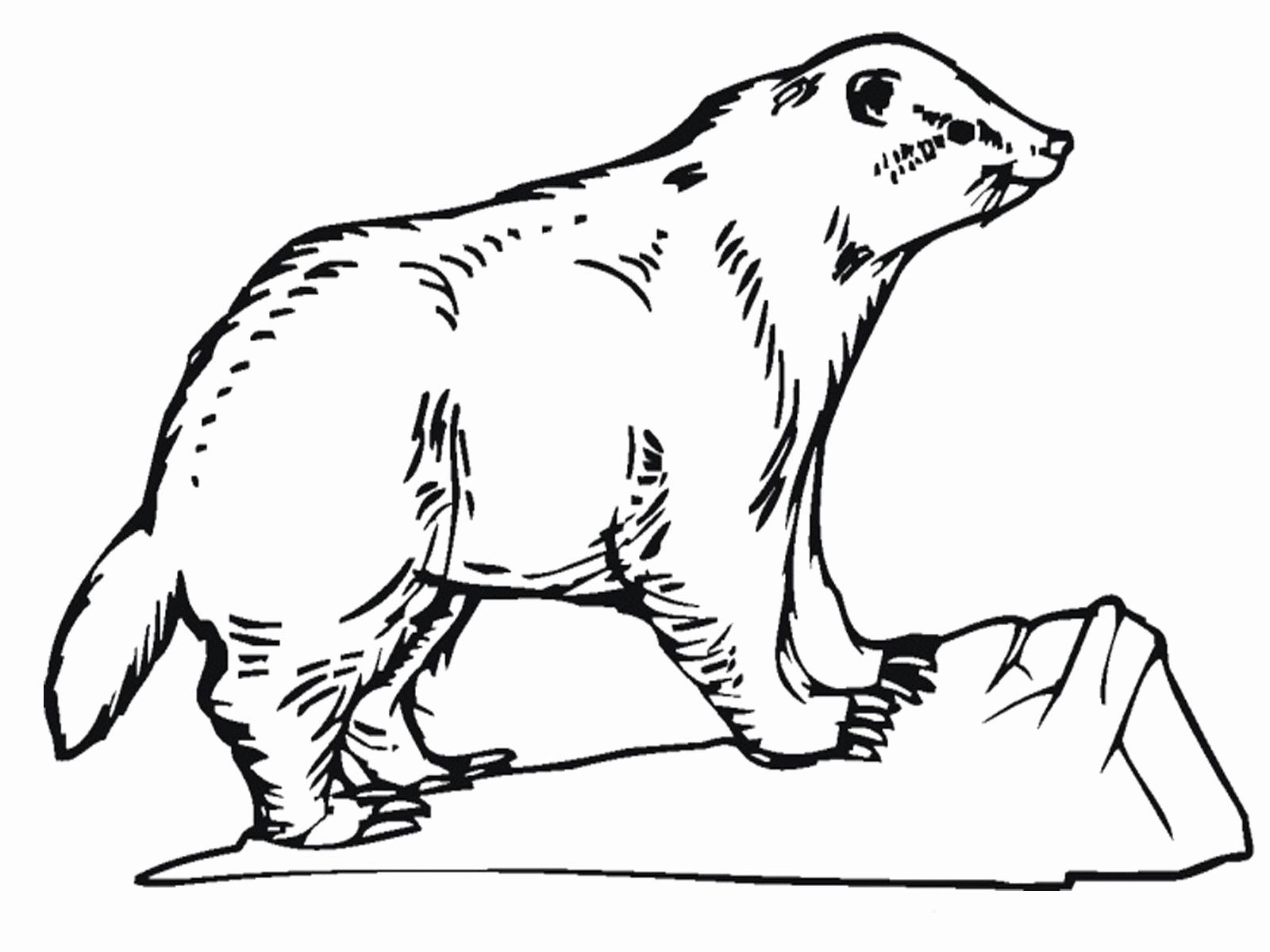 Realistic Animals Coloring Pages Elegant Realistic Animal
