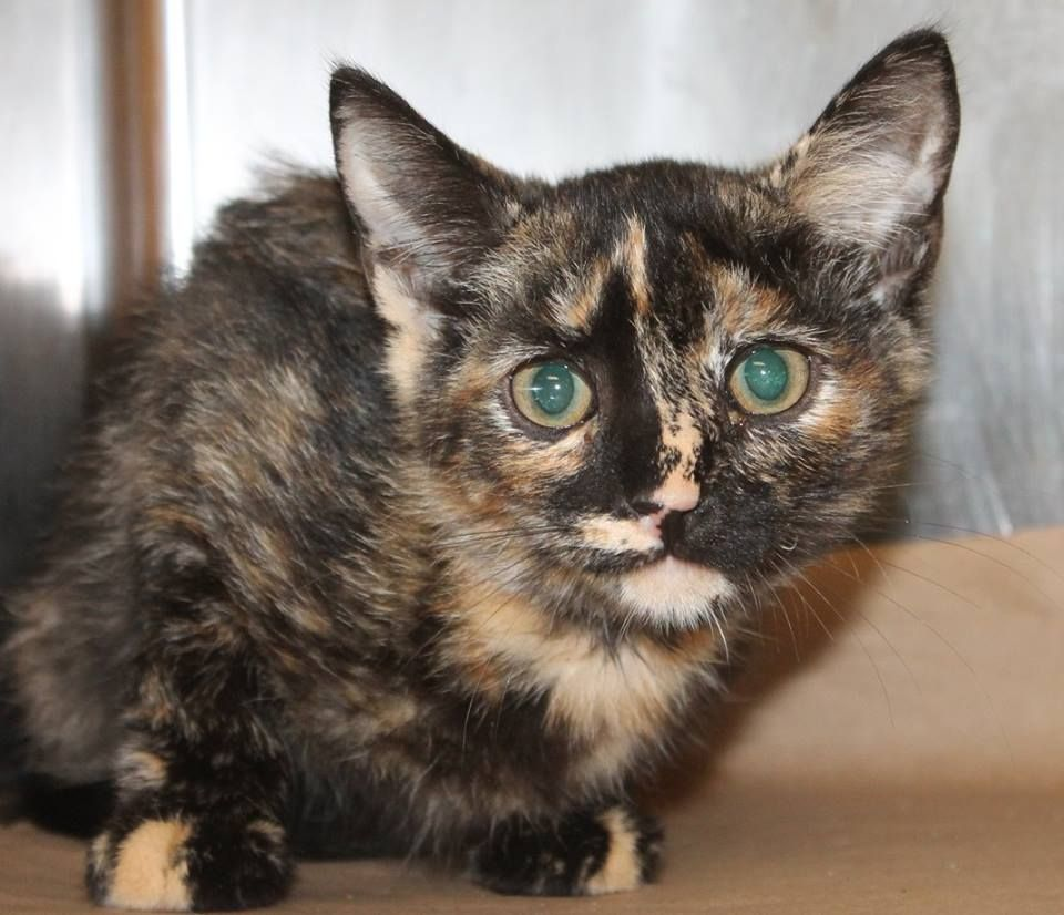 RESCUED Intake 8 9 Available 8 15 NAME Sequoia ANIMAL ID