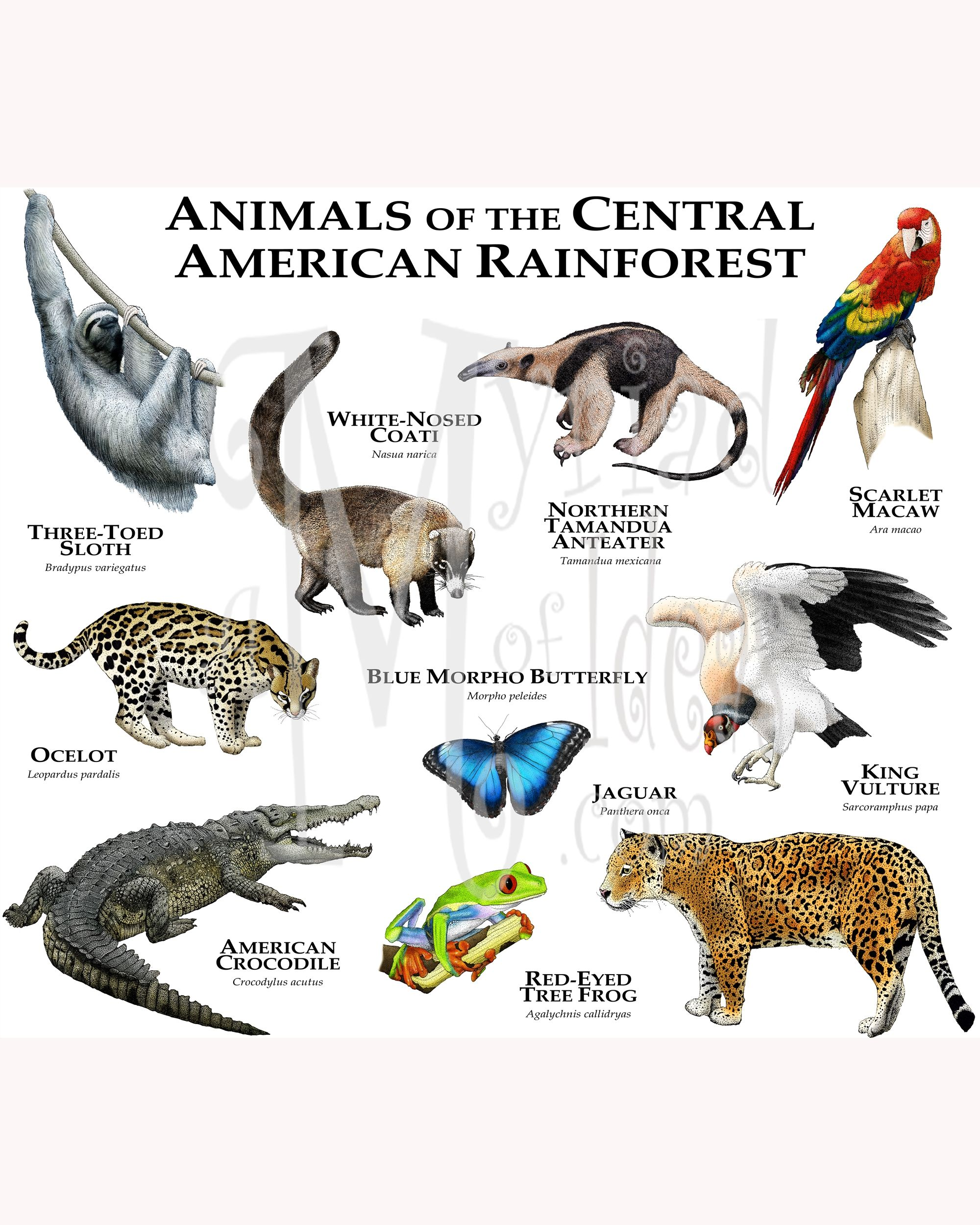 Animals Of The Central American Rainforest T Shirt Animal Habitats Animals Wild Rare Animals