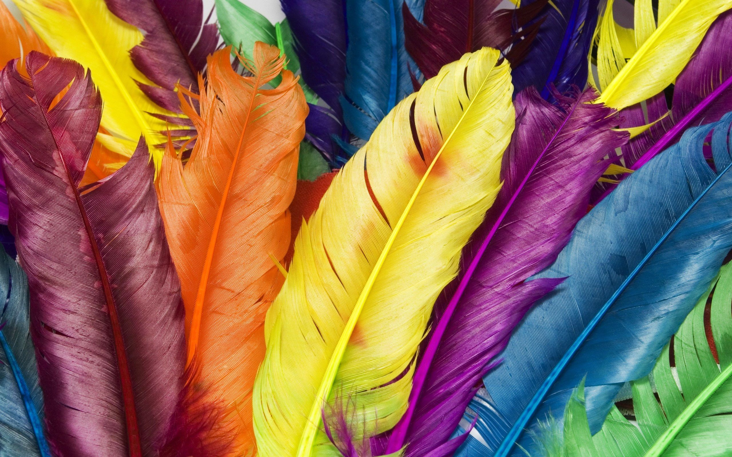 Feathers In Colors Hd Wallpaper Feathers In Colors Wallpapers