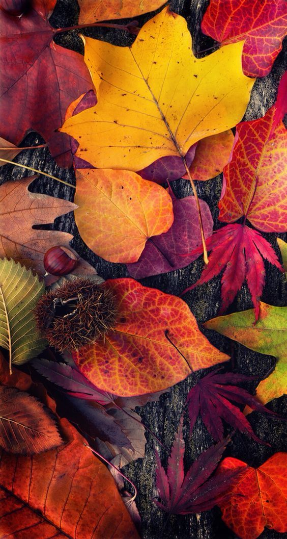 Fall iPhone Wallpapers - 30 Cute Fall iPhone Background Ideas for FREE Download #falltrees