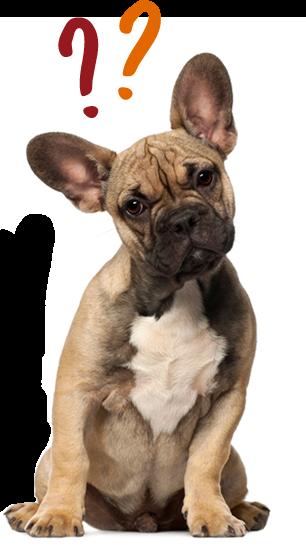 pet insurance. Get it here. Pet insurance reviews, Dogs