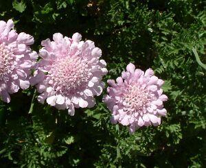 Pin On Flower Essences
