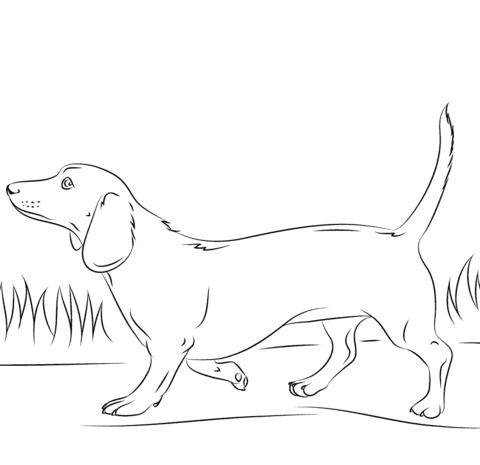 Dachshund dog Coloring page | Dachshund | Pinterest