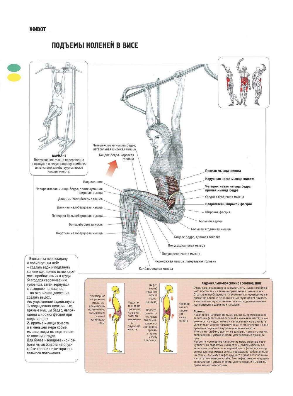 Как правильно качать мышцы