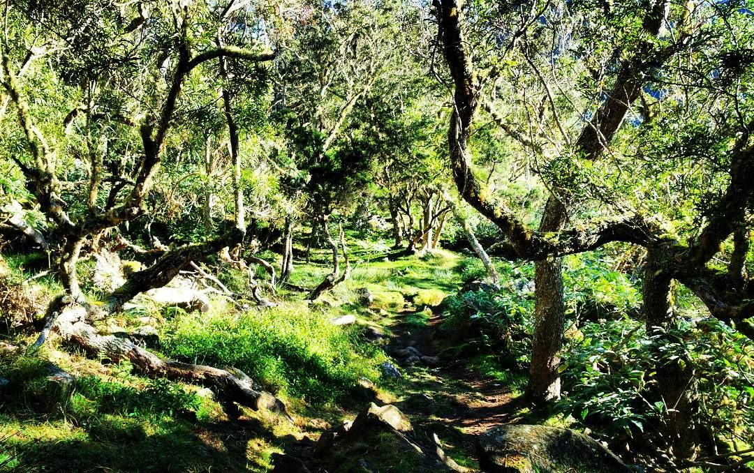 Enchantée  #mafate #reunionisland #goodday #instagood #lareunion #landscape #scape #islandlife #fireisland #green #nature #trees #colorfull #trail #trip #way #sport #paradise #colorfull #nature #wild #974 #gotoreunion #974island #forest #morning #trail #sport #trek #mountain #hapiness by eltapas