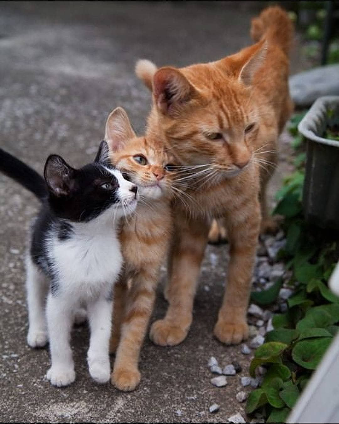Polubienia 3 014 Komentarze 26 My Dreamy Cats Mydreamycats Na Instagramie Follow Us Mydreamycat In 2020 Cute Baby Animals Cute Cats And Kittens Cute Animals