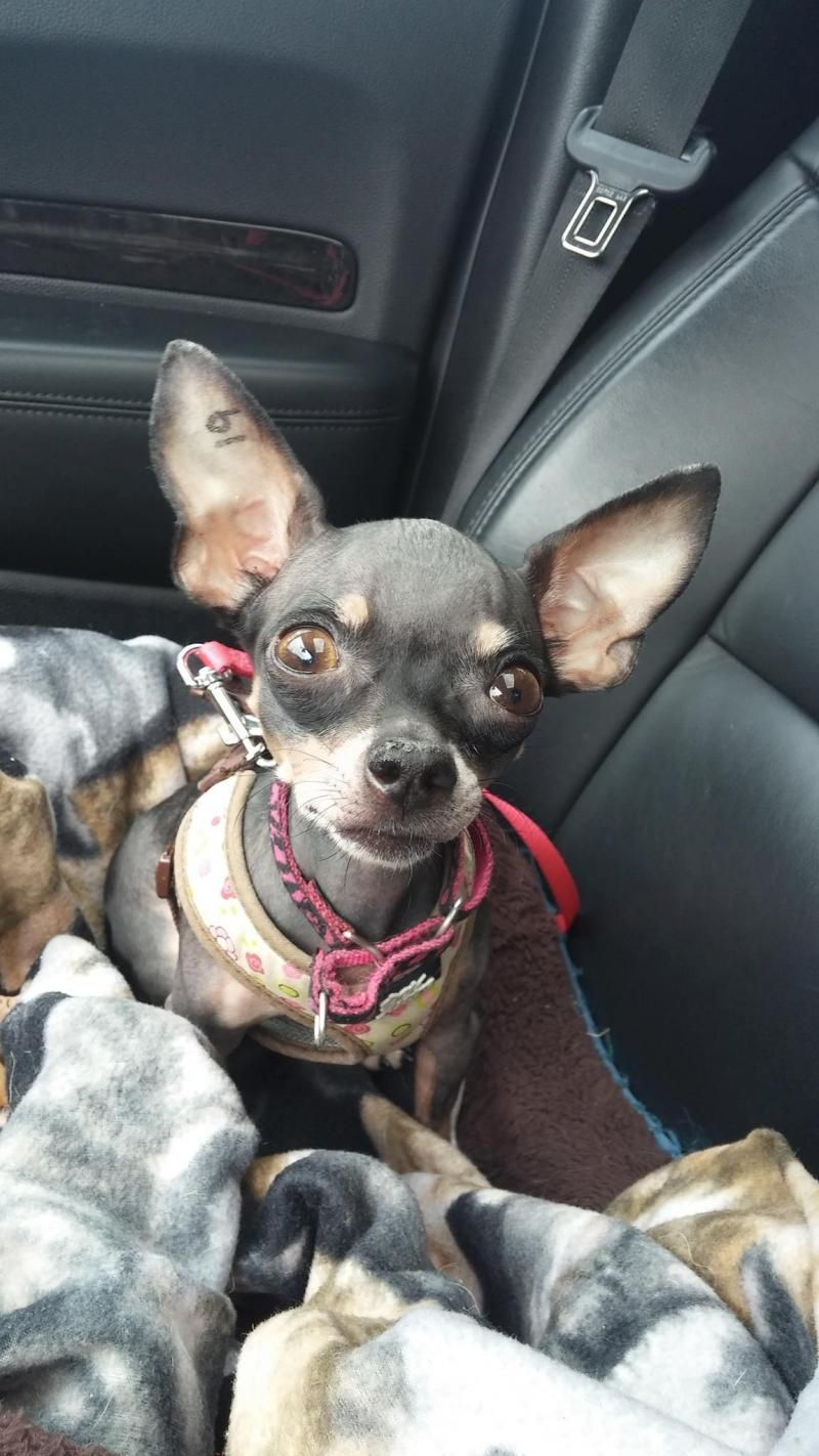 Adopt Zooey On Petfinder Cutest Dog Ever Cute Dogs Kittens And Puppies