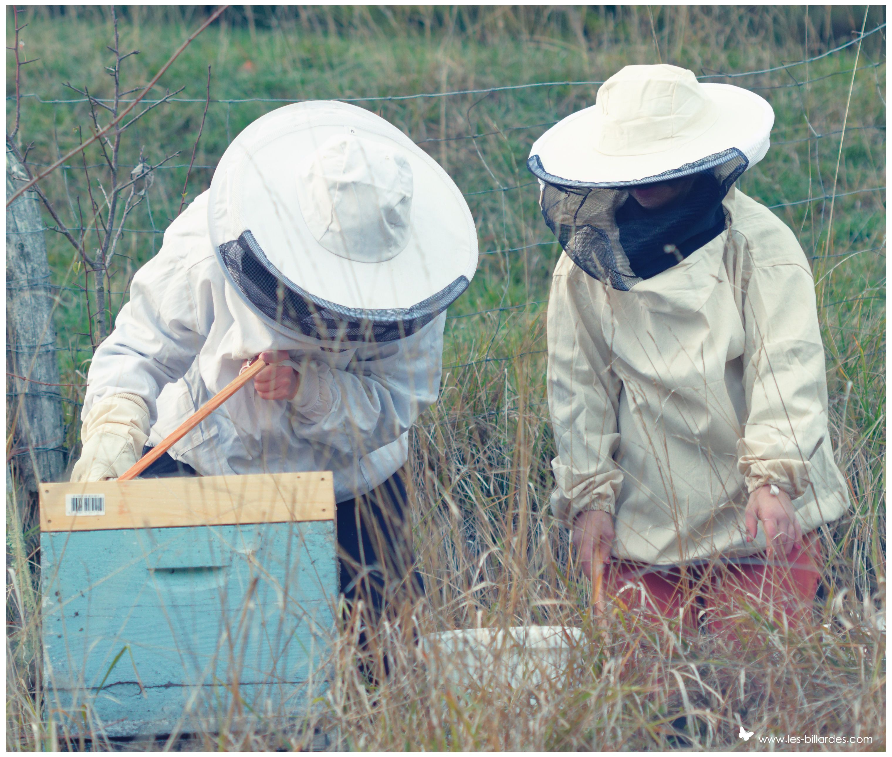 32++ Faire venir les abeilles dans son jardin ideas in 2021
