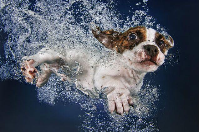 O autor diz que já ensinou mais de 1500 cães a nadar