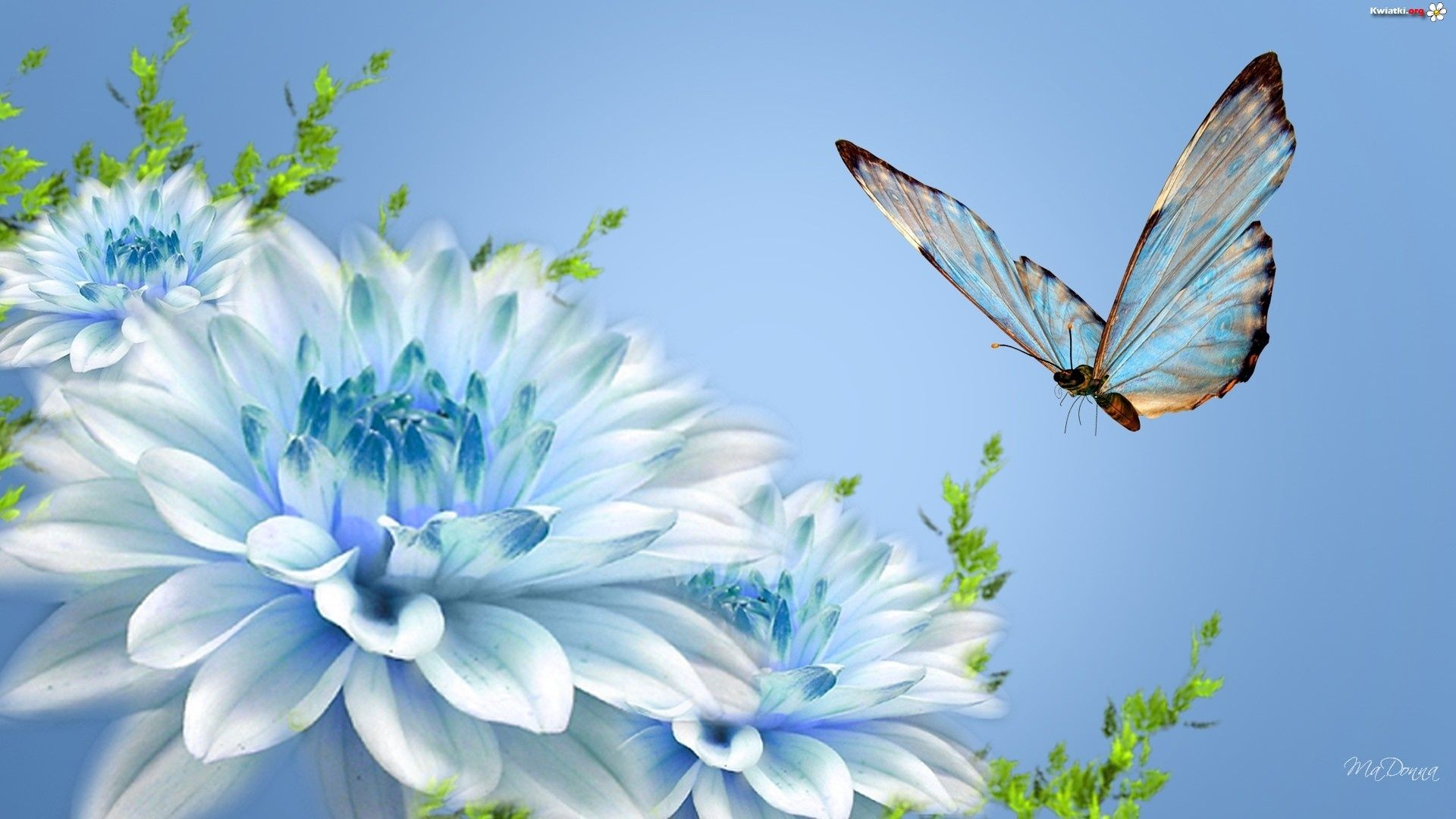 Wallpaper Blue Butterfly And Beautiful Blue Flowers 1920x1080 Blue Flower Wallpaper