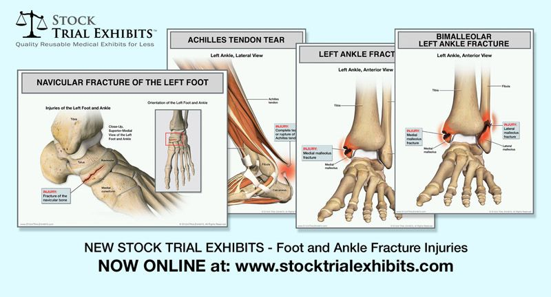 Anatomy Of Left Ankle Gallery Human Body Anatomy