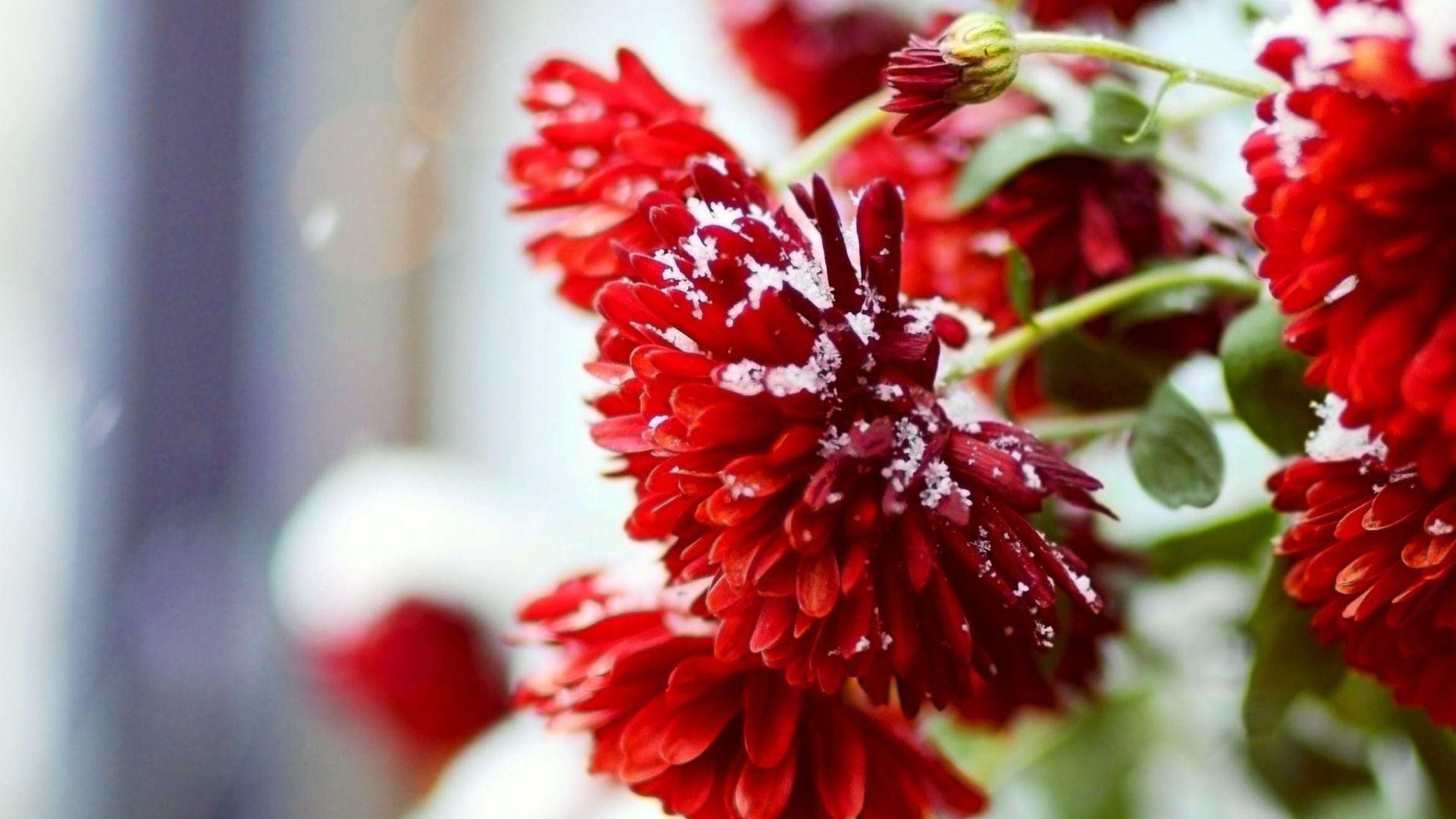 Season Voices By Deji Flower Wallpaper Winter Flowers Flower Pictures