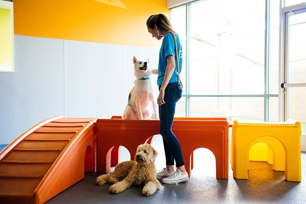 Dogtopia Prices Pet grooming, Service animal, Dog daycare