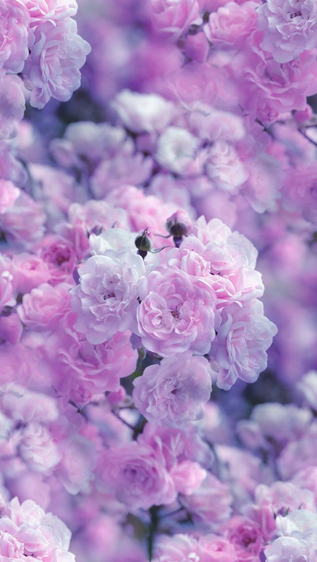 Nature wallpaper iPhone Pretty pics ✨ Pinterest - lila blumen bestimmen