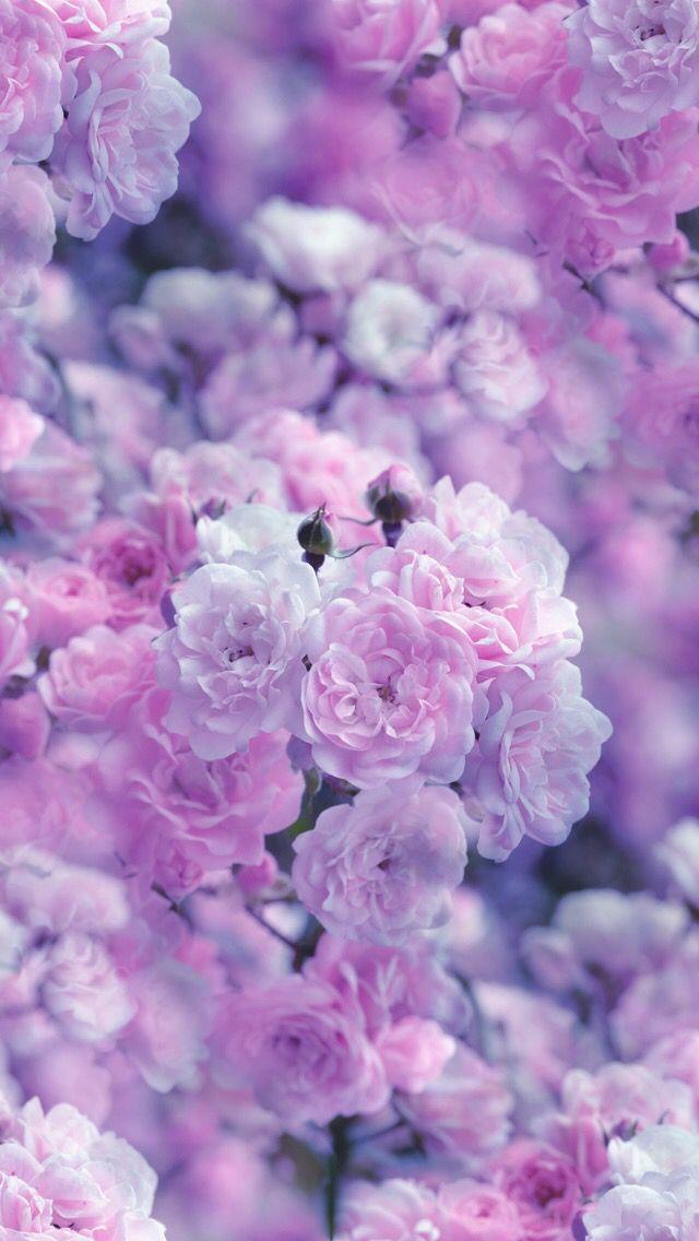 Nature Wallpaper Iphone Purple Flowers Wallpaper Purple Wallpaper Flower Wallpaper