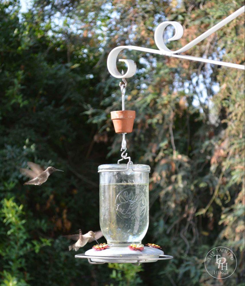 DIY Hummingbird Feeder Ant Moat Tutorial Diy hummingbird