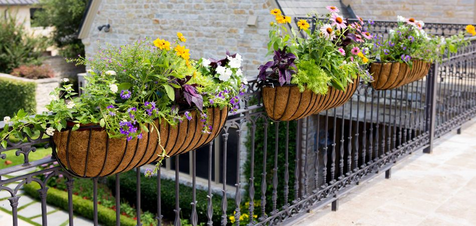 Wrought Iron Planters Hanging Baskets Wall Troughs Plants