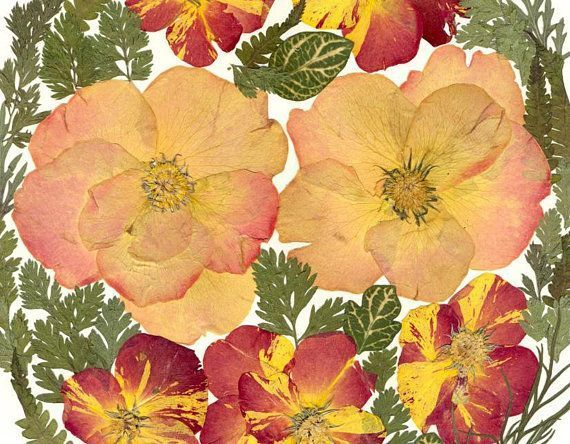 Gedrückt Rosen Botanische Art Getrocknete Rose Gepresste Blume Kunst Getrocknet…