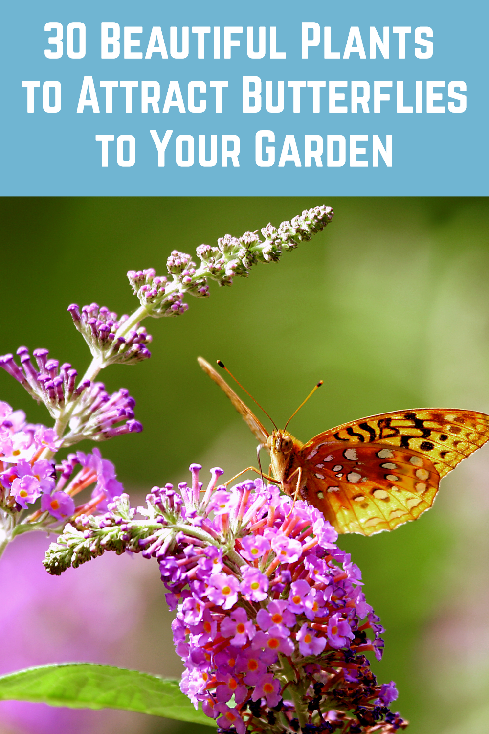 30 Beautiful Plants To Attract Butterflies To Your Garden In 2020 Plants That Attract Butterflies Plants Attract Butterflies