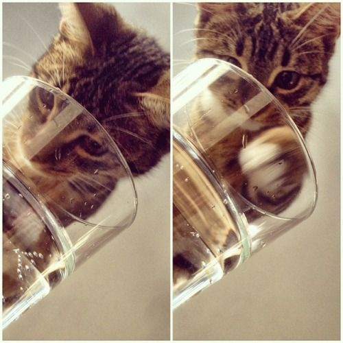 The Best Funny Pics Compilation ambmusic:  Sparkling water is the shit. #cat #catsofinstagram...