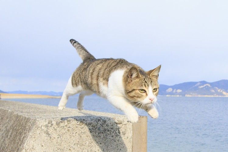 Photo Book Dedicated To Flying Cats To Come Out In Japan Jumping Cat Cats Cute Animals