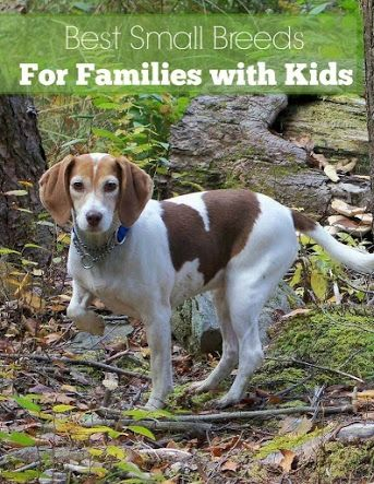 The 25 Best Best Dogs With Kids Ideas On Pinterest