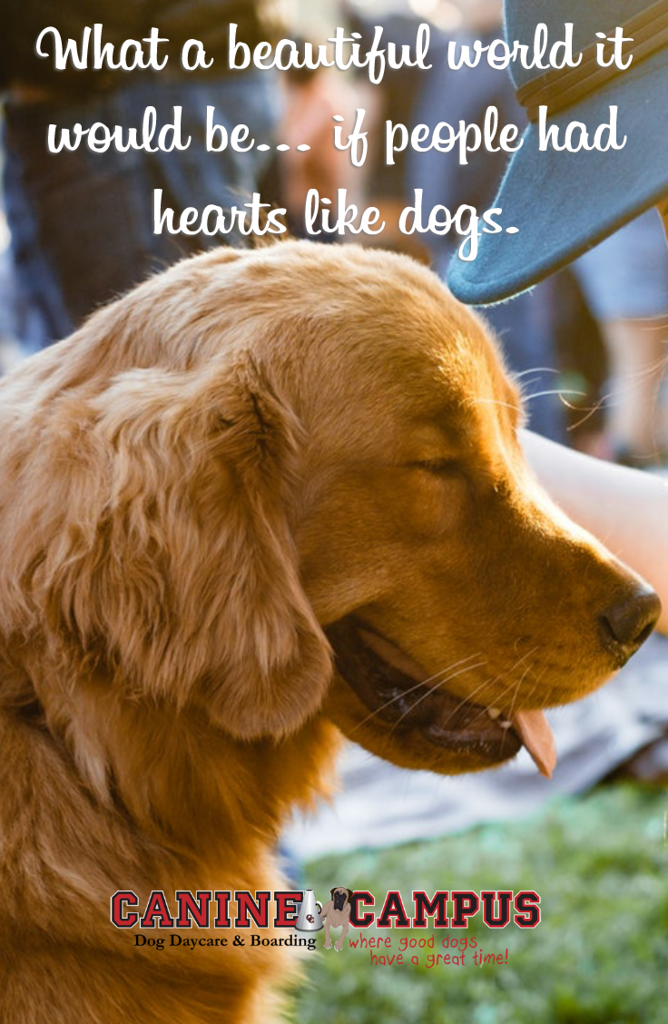 Pin On Dog Quotes
