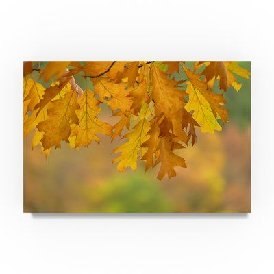 Trademark Art \'Autumn Oak Leaves\' Photographic Print on Wrapped ...
