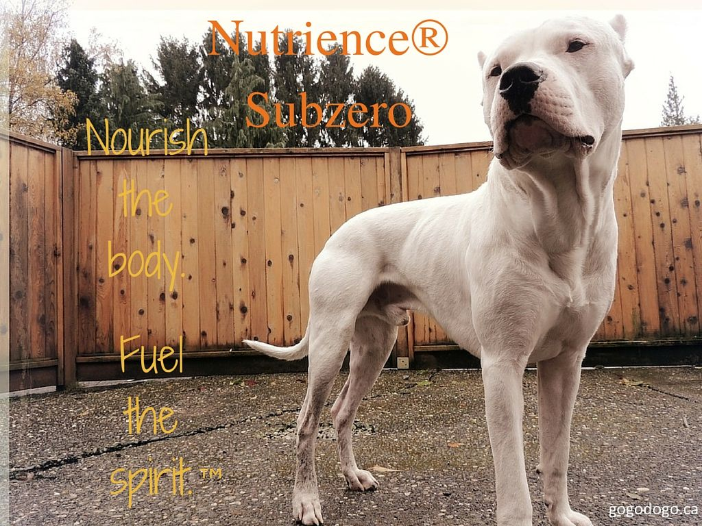 Taste The Difference With Nutrience Subzero Subzerodifference With Images Dog Health Dog Health Tips Dog Care