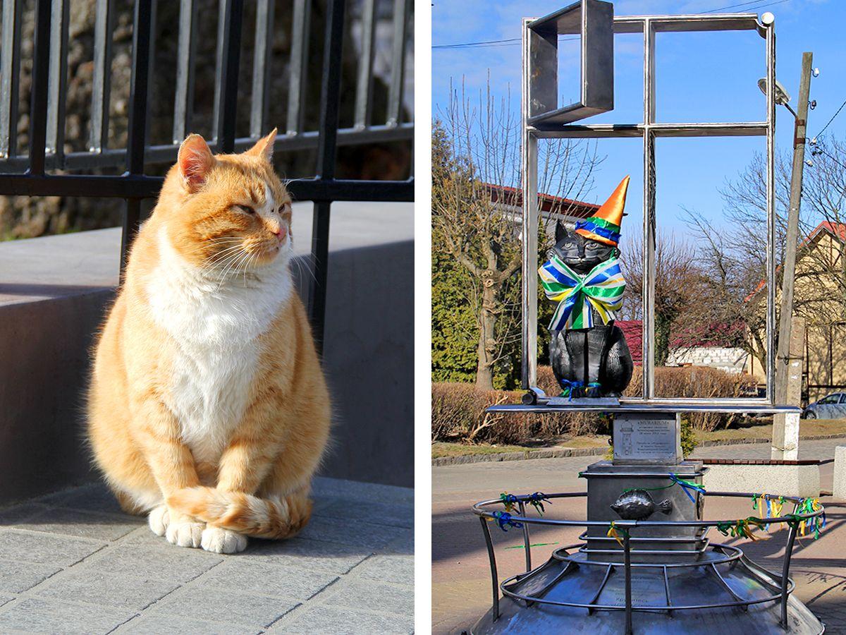 Рыжий местный кот и монумент зеленоградскому коту
