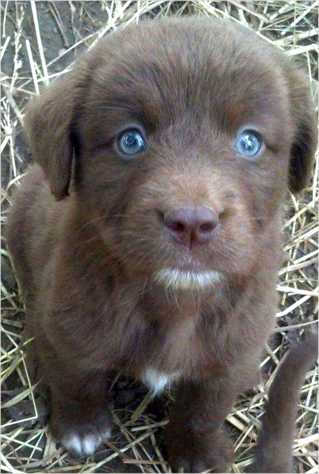 It Is Good To Ask Yourself Do You Need Dog Training Hacks Go And Find Out More In Our Article Dogtraining Puppies Lab Puppies Puppies With Blue Eyes