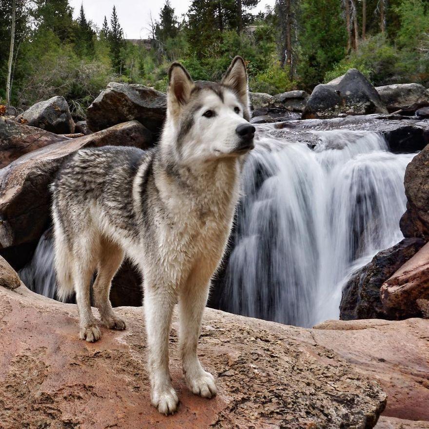 Картинка волки и собаки
