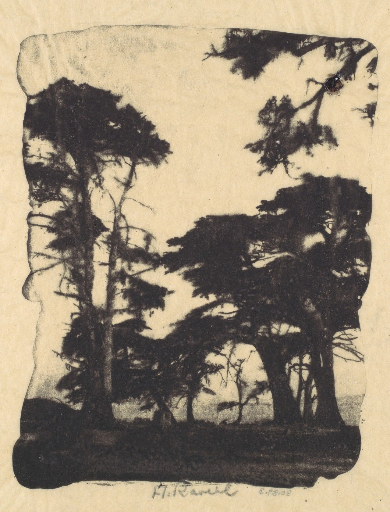 Cypress, Pebble Beach, California.Gum bichromate print,Henry Ravell, 1910s (via The Metropolitan Museum of Art)