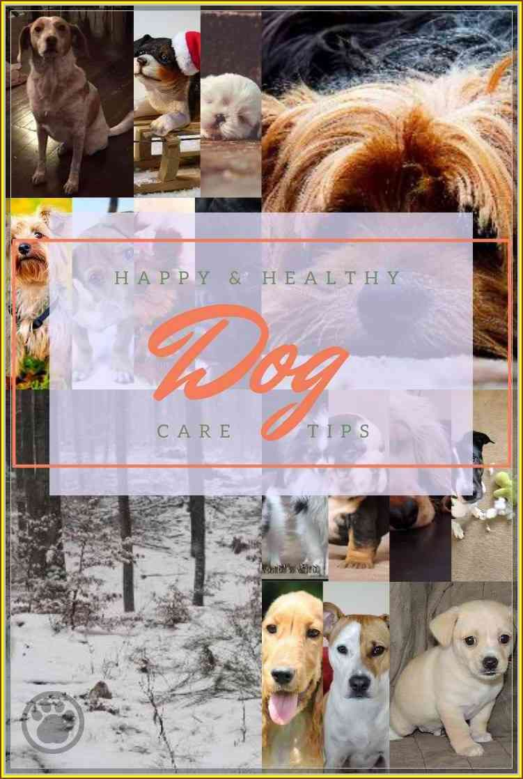 Stop The Headaches Learn More About Dog Care Dog Care Dog