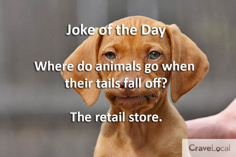 Image Result For Hilarious Joke That Will Make You Cry Jokes Clean Jokes Funny