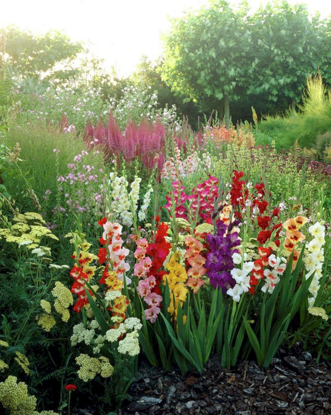 Beautiful 5 Gladiolus Flower Ideas For Your Garden Flower Garden Design Lily Plants Flower Garden